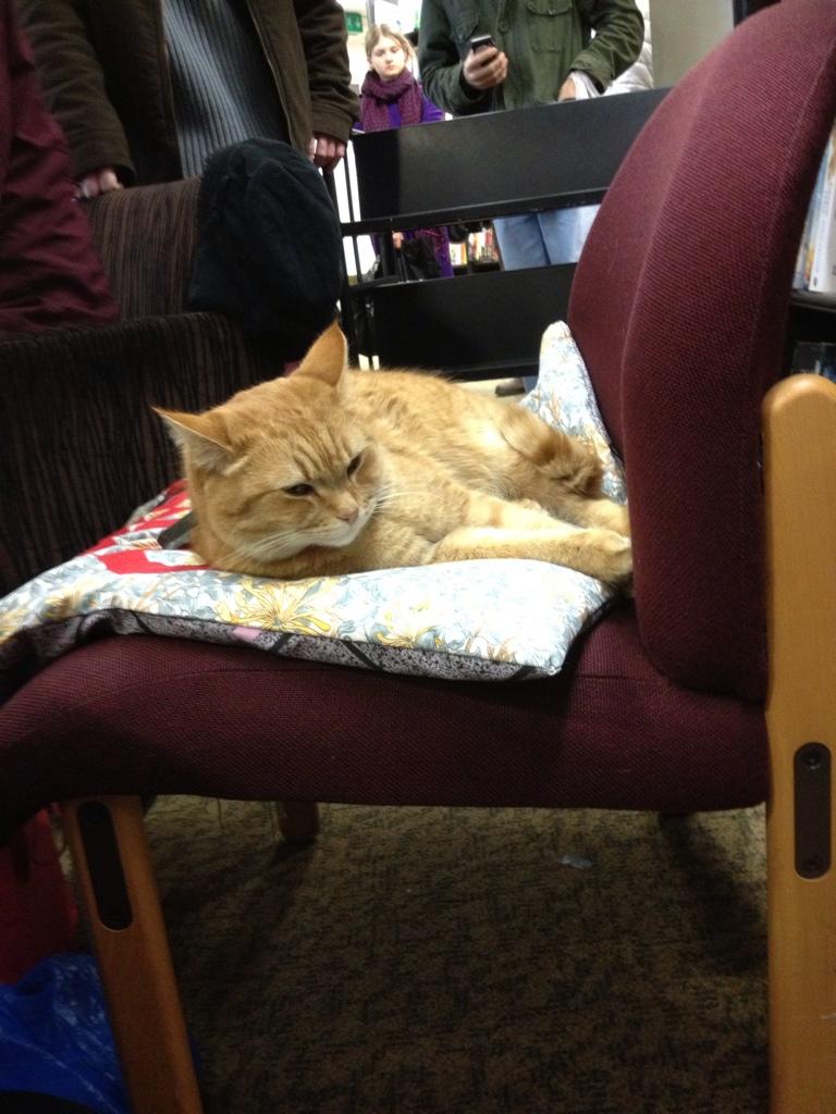 Street Cat Named Bob Birmingham