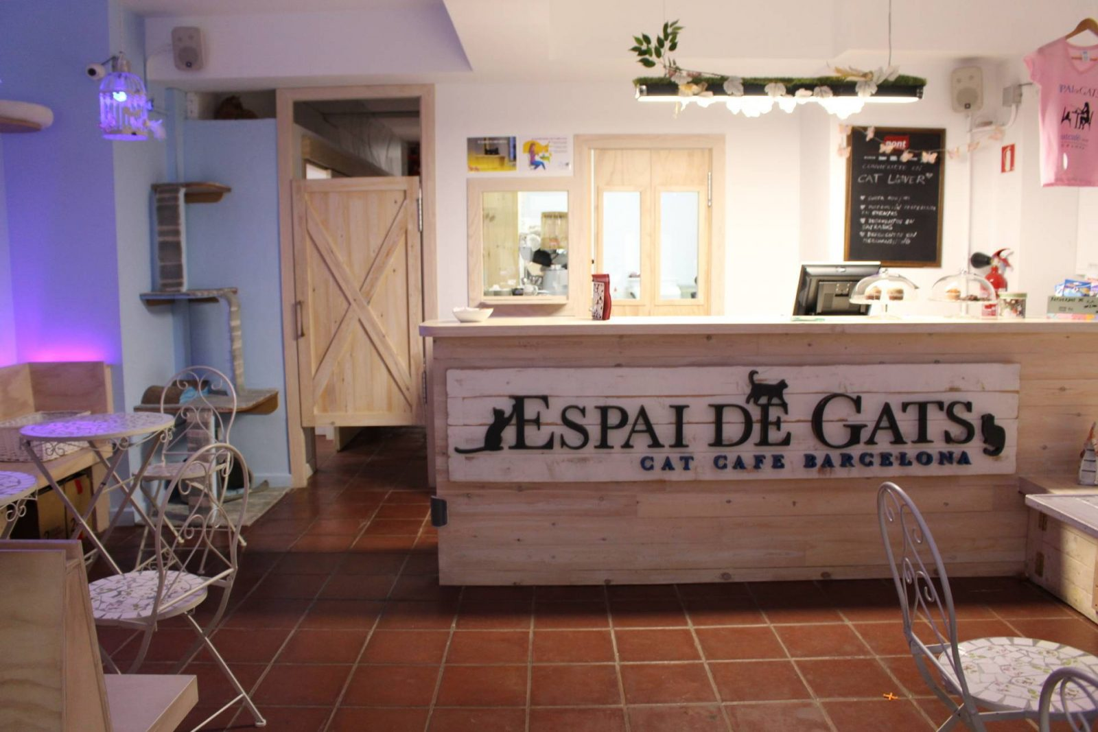 Espai de Gats Barcelona cat cafe