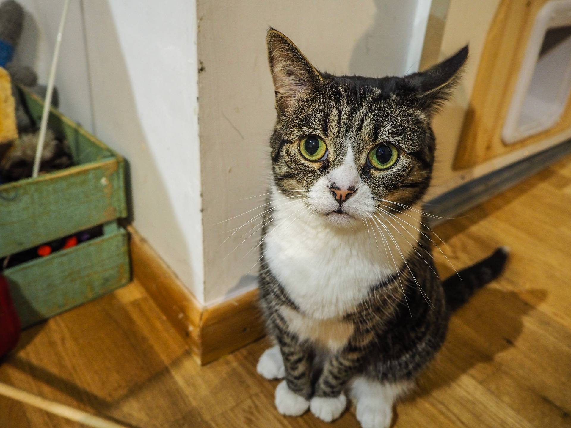 Bournemouth Pause Cat Cafe