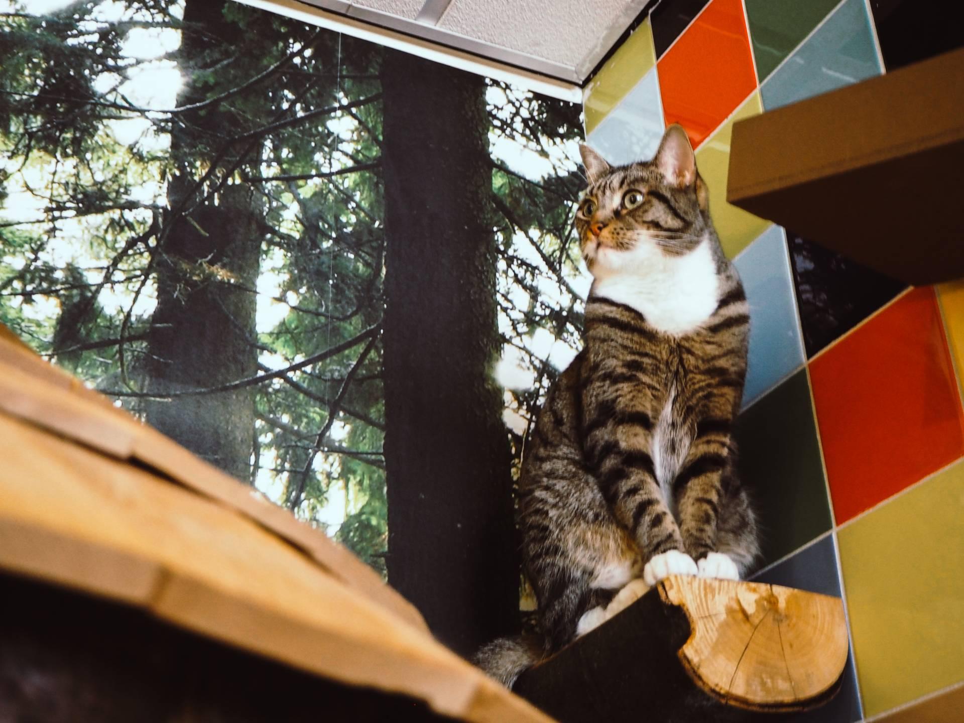 Kitty Cafe Nottingham, Charlotte