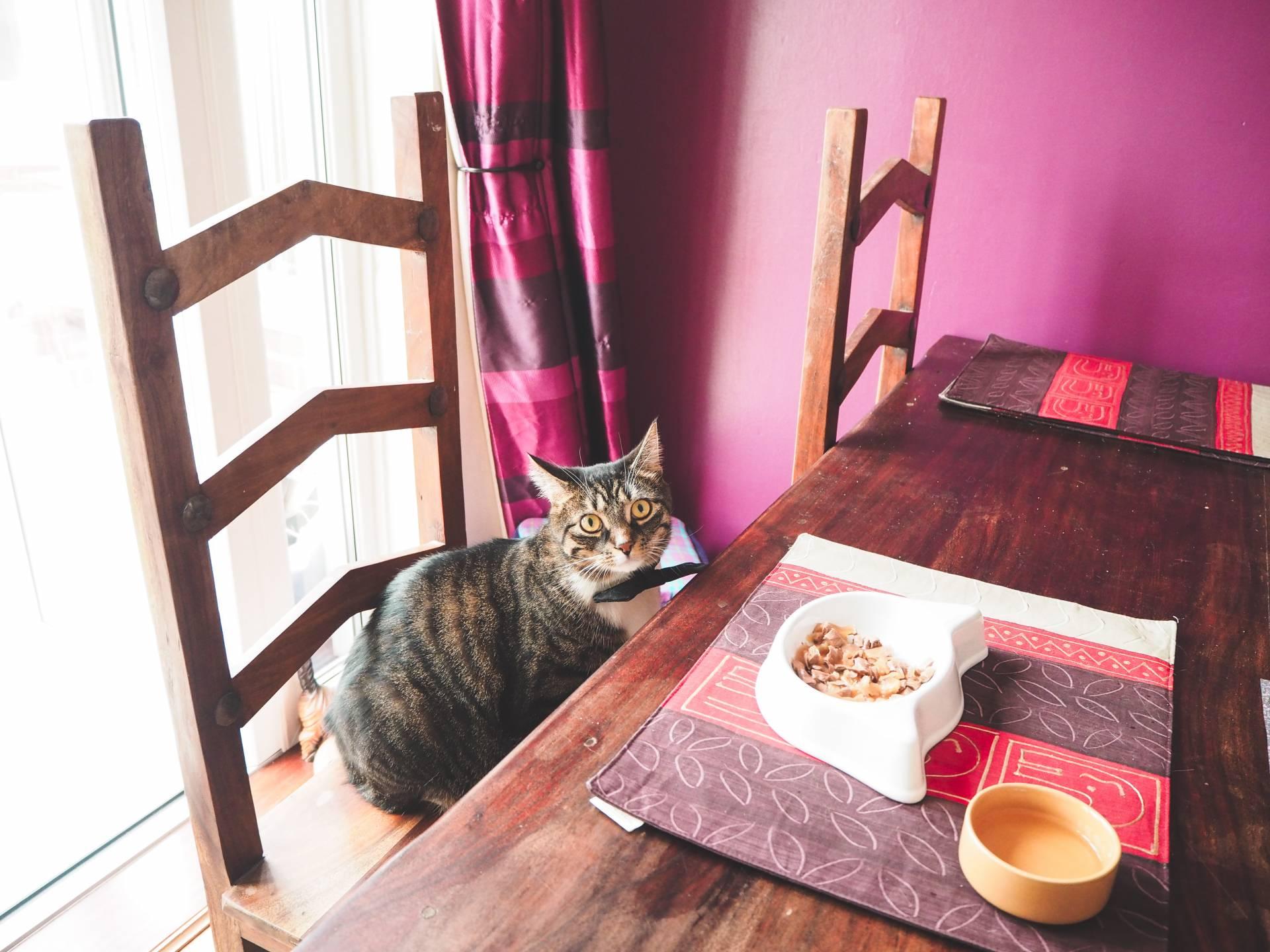 Whiskas cat casseroles - Tabby cat birthday dinner date