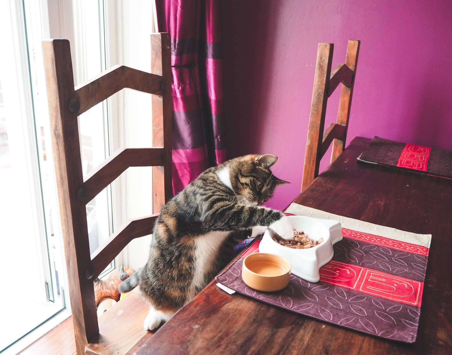 Whiskas cat casseroles - dinner date with my cat